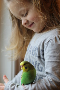 Watching our daughter and her soulful, caring way really touches my spirit and invigorates me to work so hard to produce babies others can enjoy like we do. She is here with a baby light green English Budgie male named RJ. © COPYRIGHT 2016 Eddie's Aviary