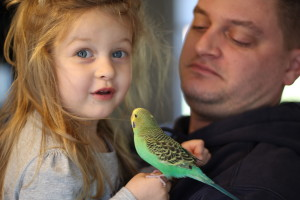 Elena just turned 3 and she loves birds! I see a budding aviculturist. © COPYRIGHT 2016 Eddie's Aviary