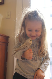 Our daughter enjoying some baby English budgies. This is a D grey cinnamon hen. COPYRIGHT 2017 Eddie's Aviary