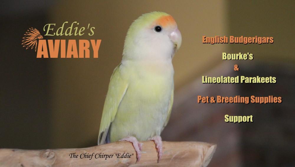 Eddie's Aviary